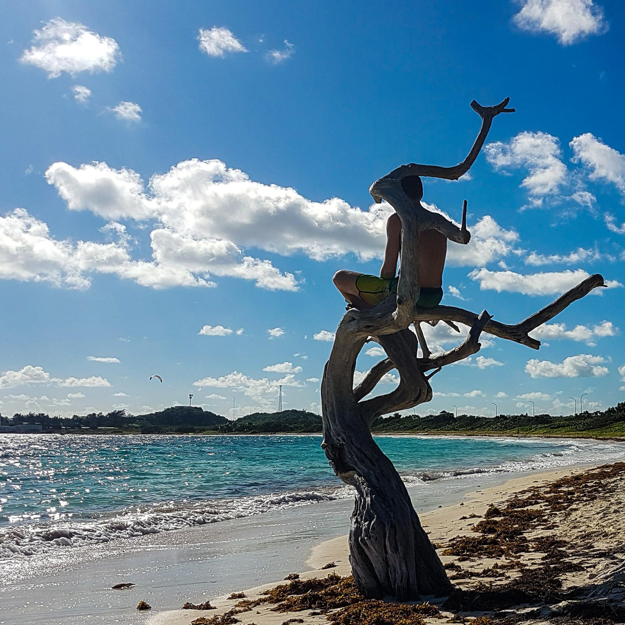 Jabberwock, Antigua